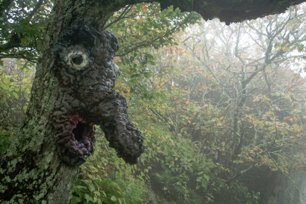 land-of-oz-face-in-tree