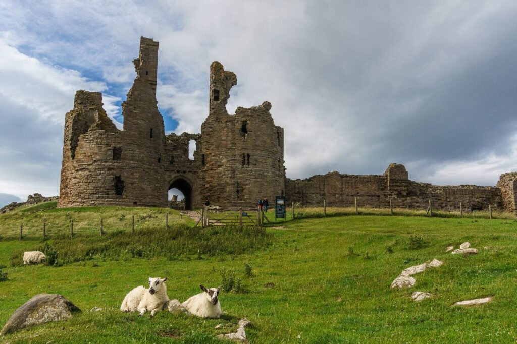 abandoned castle with sheep in England